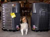 Wendi Shows Maytag Air Conditioners